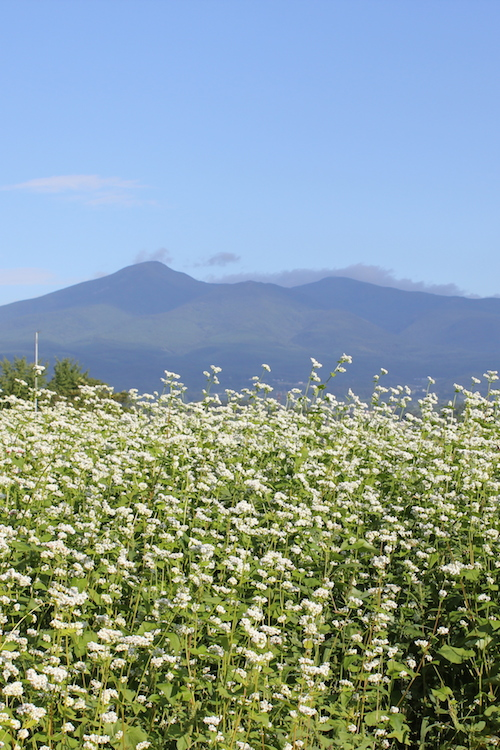 安達太良山と蕎麦畑