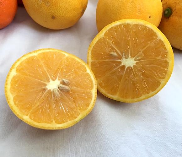 岩城島産スイートレモン