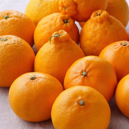 愛媛県上島町・岩城島の柑橘